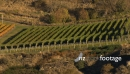Chard farm vineyard 5 3282